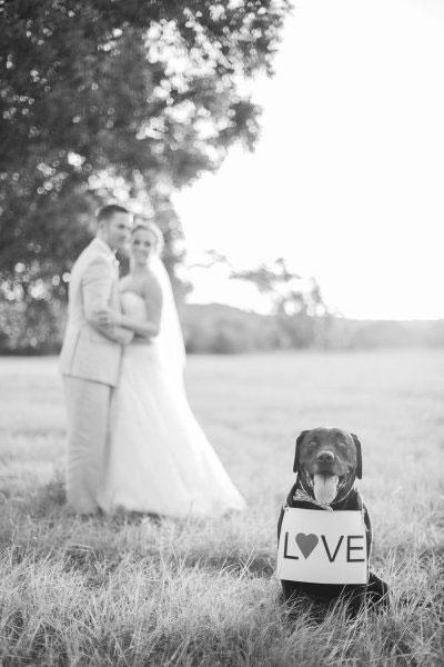 Pets-no-Casamento-08