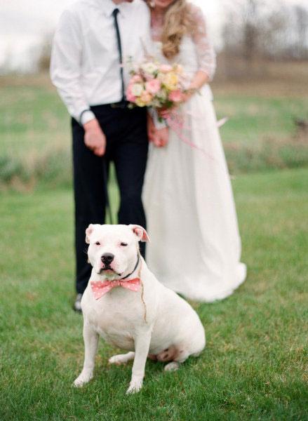Pets-no-Casamento-09