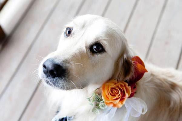 Pets-no-Casamento-15