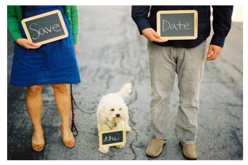 Pets-no-Casamento-16