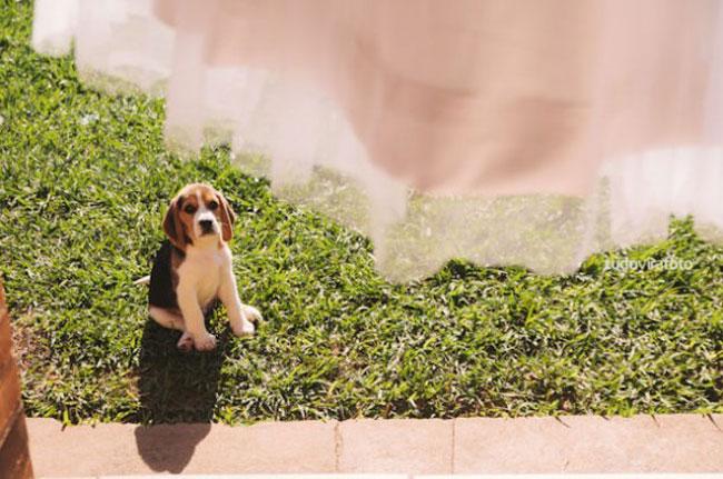 Pets-no-Casamento-17